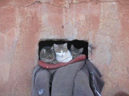 кот семья